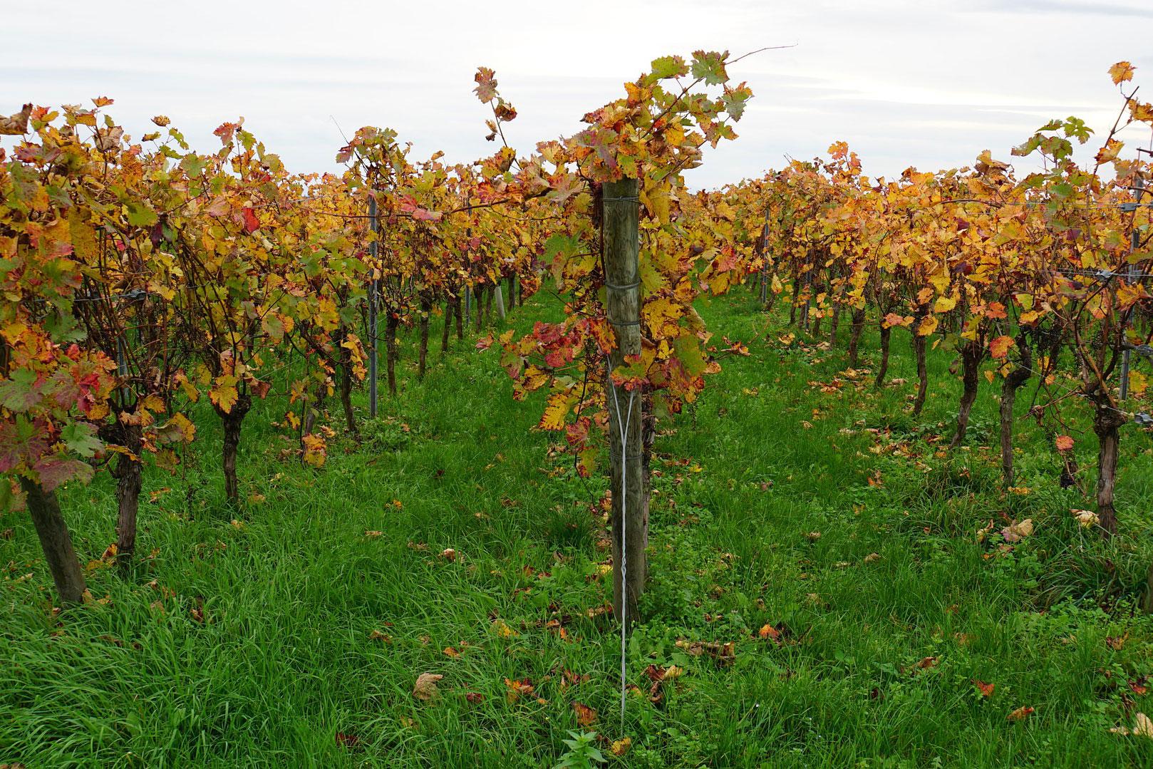 rendu-3-image-gratuite-internet-vineyard-4586452_1920